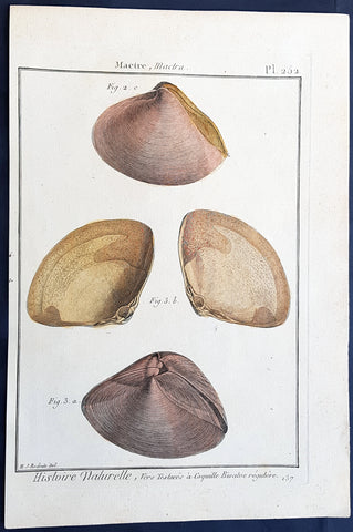 1789 Lamarck & Redoute Antique Concology Print of Molluscs Shells, Pl 252