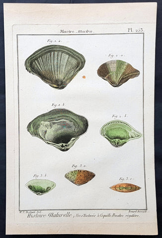1789 Jean Baptiste Lamarck Antique Concology Print, Surf Clam Shells Plate 253