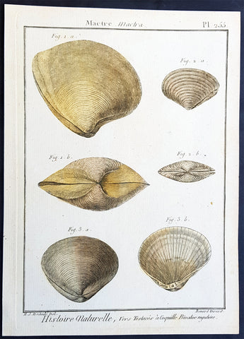1789 Jean Baptiste Lamarck Antique Concology Print, Surf Clam Shells - Pl 255