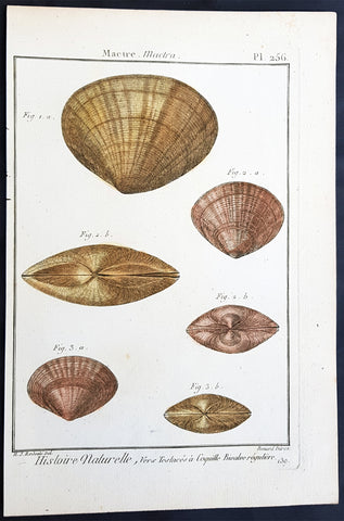 1789 Jean Baptiste Lamarck Antique Concology Print, Surf Clam Shells - Pl 256