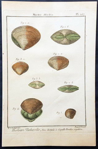 1789 Jean Baptiste Lamarck Antique Concology Print, Surf Clam Shells Plate 257
