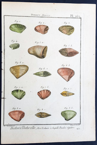 1789 Lamarck & Redoute Antique Concology Print of Banned Wedge Shells, Pl 262