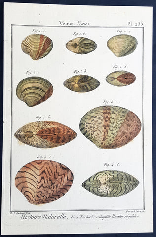 1789 Lamarck & Redoute Antique Concology Print Venus Clam Shell Pl 265