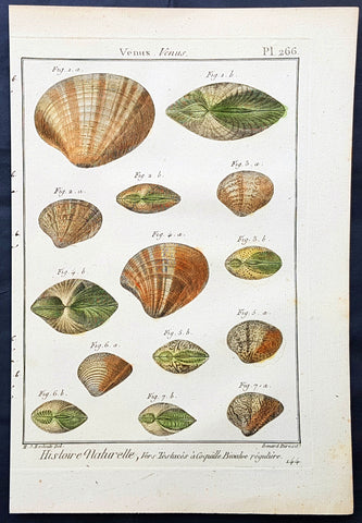 1789 Jean Baptiste Lamarck Antique Concology Print, Seawater Clam Shells, Plate 266
