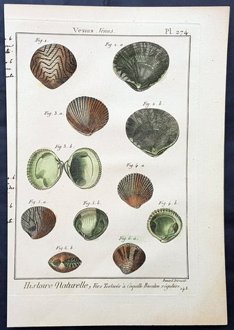 1789 Jean Baptiste Lamarck Antique Concology Print, Seawater Clam Shells, Plate 274