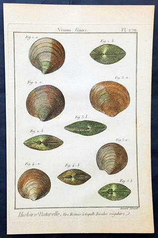1789 Jean Baptiste Lamarck Antique Concology Print, Seawater Clam Shells, Plate 279