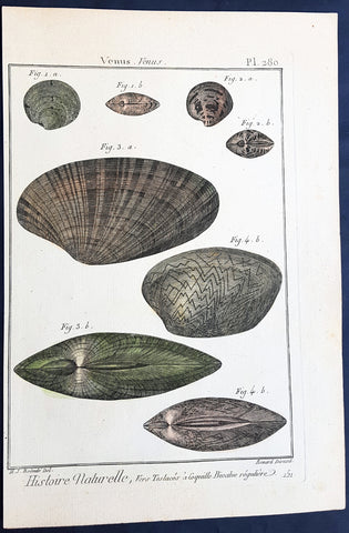 1789 Lamarck & Redoute Antique Concology Print of Venus Clam Shells, Pl 280