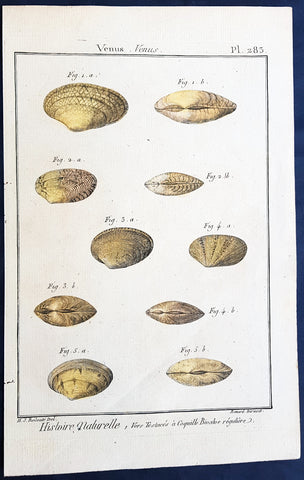 1789 Lamarck & Redoute Antique Concology Print of Venus Clam Shells, Pl 283
