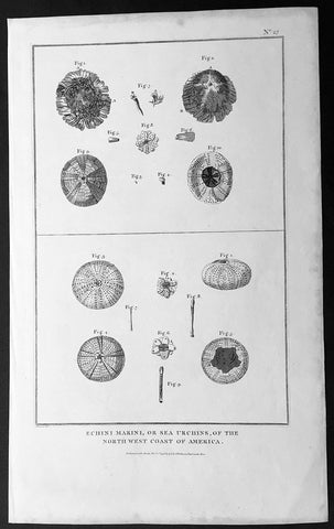 1798 Laperouse Large Antique Print of Sea Urchins of NW America, California