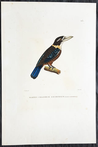 1824 Louis Freycinet & Paul-Louis Oudart Antique Print Rufous-Bellied Kookaburra