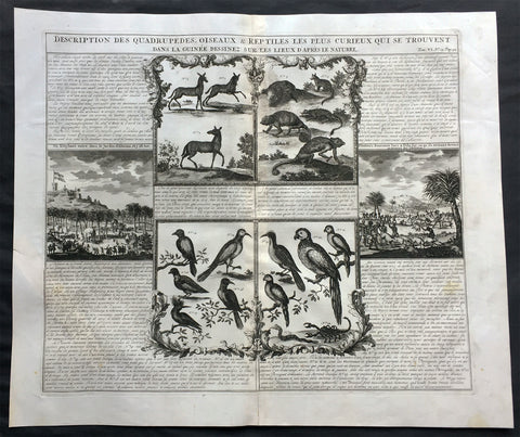 1719 Chatelain Large Antique Print of Various Mammals, Birds & Reptiles Elephant