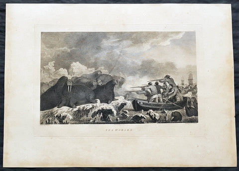 1784 Cook & Webber Large 1st Edition Antique Print Hunting Walrus in Alaska