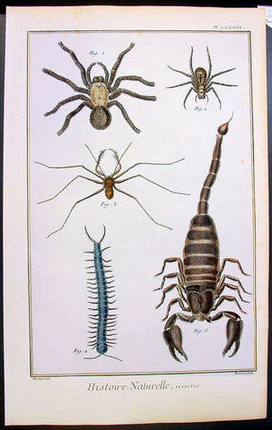 1774 Comte De Buffon Large Antique Print of Spiders, Scorpion, Centipedes