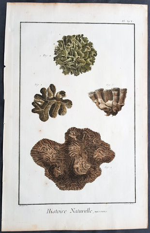 1798 Comte De Buffon Large Antique Print of Various Types of Corals