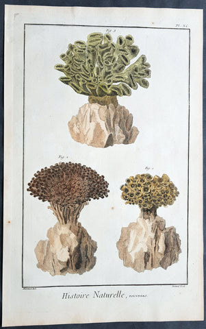 1751 Diderot Large Antique Print of Sea Coral - Polypiers