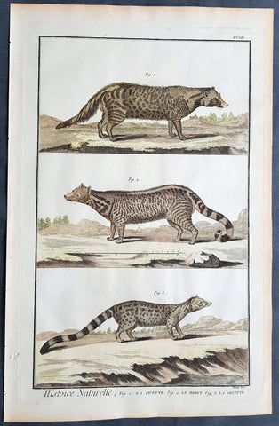 1753 Comte De Buffon Large Antique Print Mammals of Civet, Genet & Zibet Cats