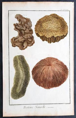 1798 Comte De Buffon Large Antique Print of Various Different Types of Corals