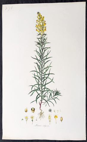 1777 W. Curtis Large Antique Botanical Print of Linaria Vulgaris Yellow Toadflax