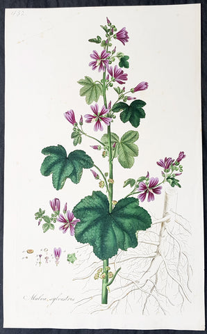 1777 W. Curtis Large Antique Botanical Print of Malva Sylvestris - Common Mallow