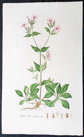1777 W. Curtis Large Antique Botanical Print of Lychnis Dioica - Red Campion