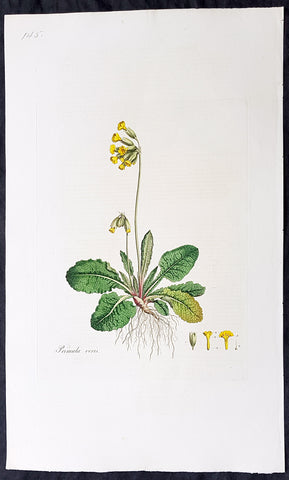 1777 W. Curtis Large Antique Botanical Print of Primula Veris,The Common Cowslip