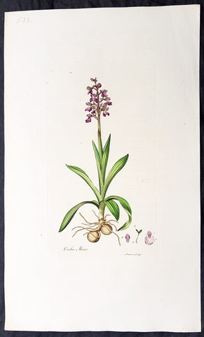1777 W. Curtis Large Antique Botanical Print of The Green Winged Orchid