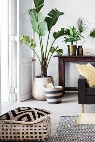 Plant life brings vibrance to any interior