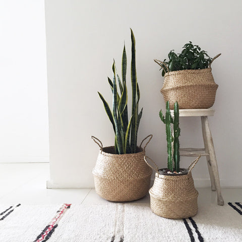 Neutral space brought to life with a trio of indoor pot plants.