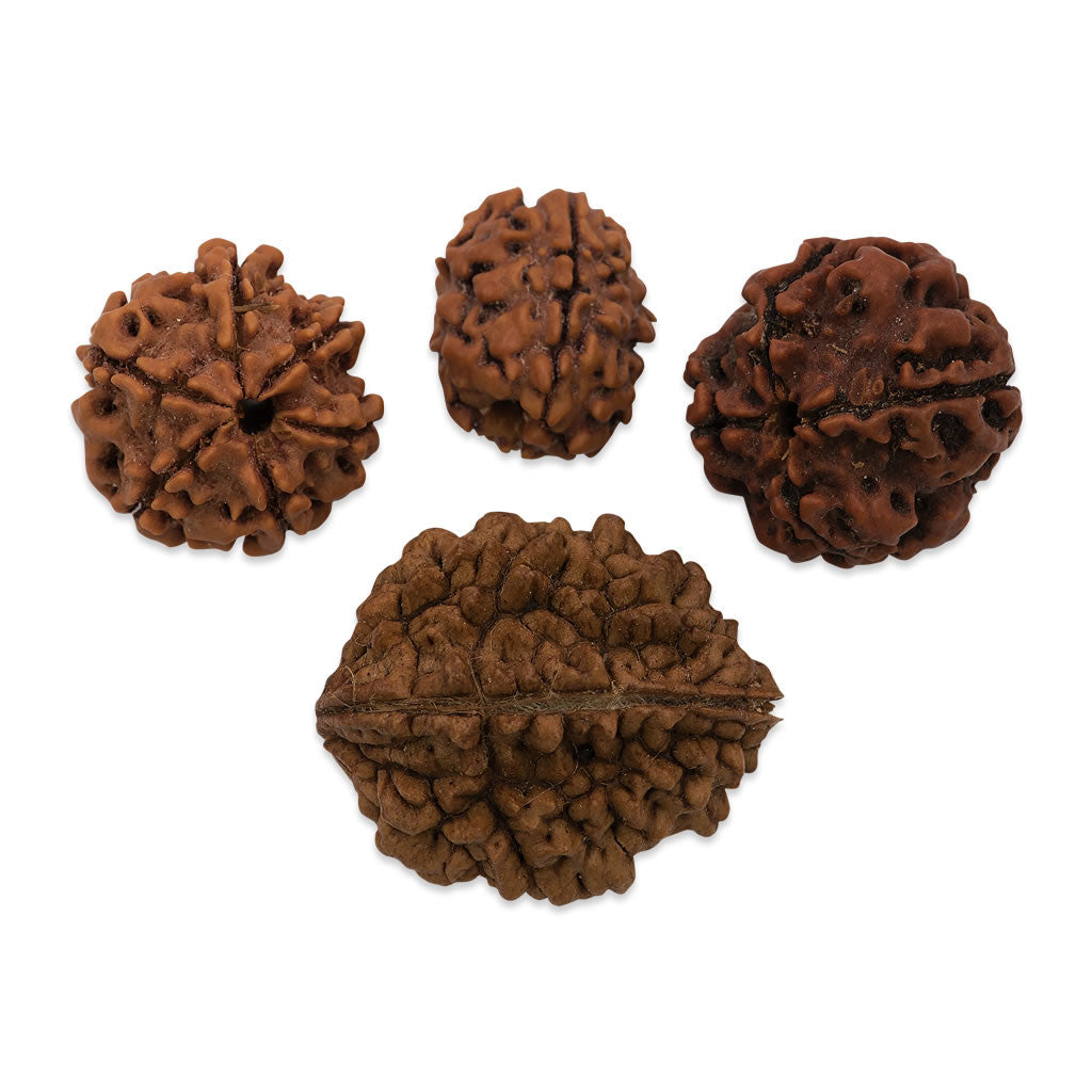 Single Rudraksha Beads