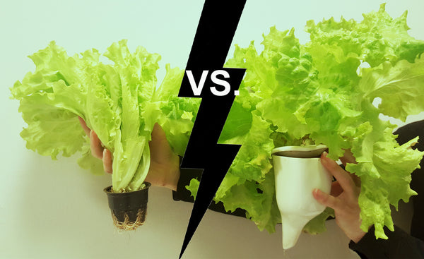 Lettuce from Natufia vs. Lettuce from Shop -  400 % Difference in Nutrition