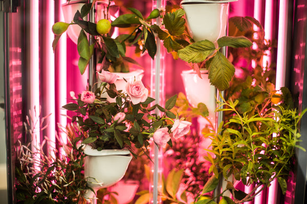 Natufia Kitchen Garden successfully passes its first showcase test in Paris