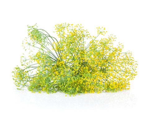 Magical Dill – Protection against Curses and Nightmares