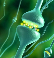 CBD cannabinoid - gets the inner system work