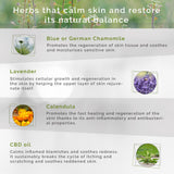 herbs for dermatitis