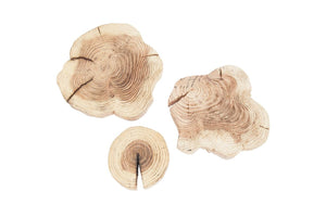 Wooden Tree Slices 20-30cm - Light Wood Slices Natural Interiors - Paradise Crow -  Natural Design & Interiors