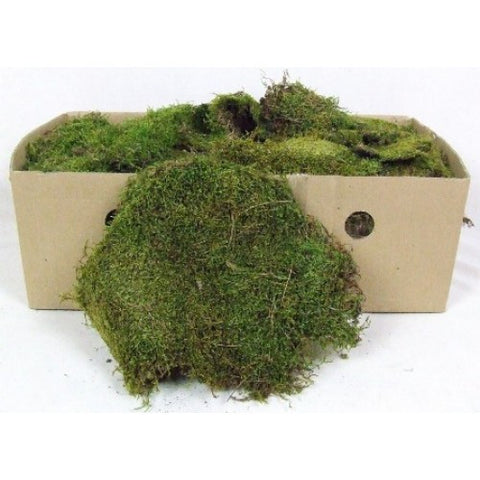 1kg Box of Flat Green Moss - Paradise Crow -  Natural Design & Interiors