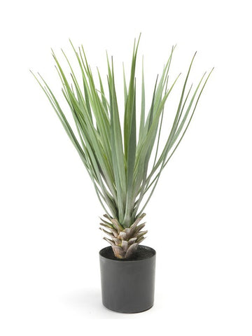 Artificial Deluxe Yucca Plant In Black Ceramic Pot & Stones 50cm - Paradise Crow -  Natural Design & Interiors