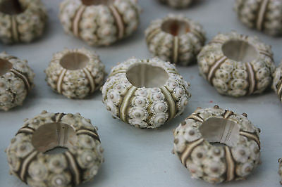 5 x Sea Urchin - Beach Decor ( Pack of 5)  Sea Urchins - Natural Stone - 2-3cm - Paradise Crow -  Natural Design & Interiors