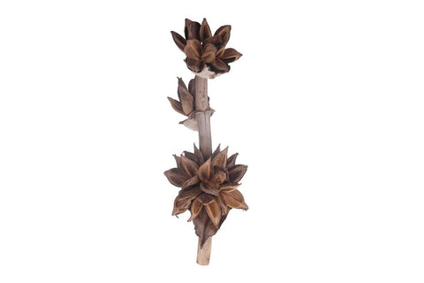 Sorroco Clusters on Trunk - Natural Home Decor - Sororoca Head- Floral Natural arrangement - Paradise Crow -  Natural Design & Interiors