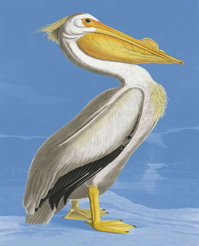 Natural History Museum Greeting Cards -  American White Pelican - Paradise Crow -  Natural Design & Interiors