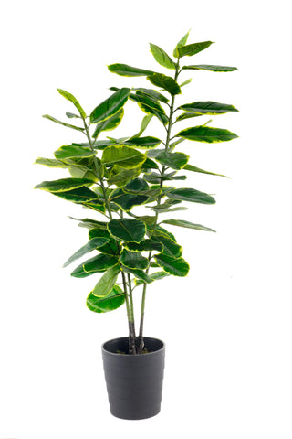 Artificial Large 110cm Rubber Ficus - Paradise Crow -  Natural Design & Interiors