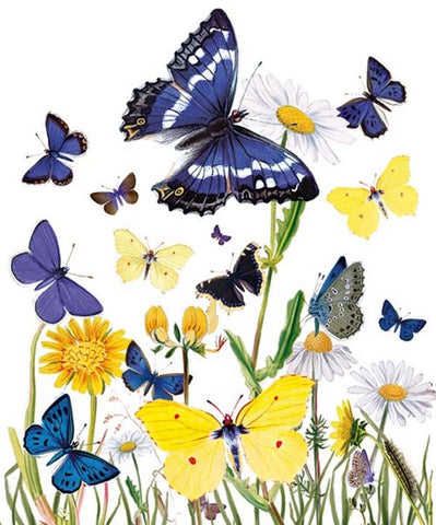 Natural History Museum Greeting Cards - British Butterflies - Paradise Crow -  Natural Design & Interiors