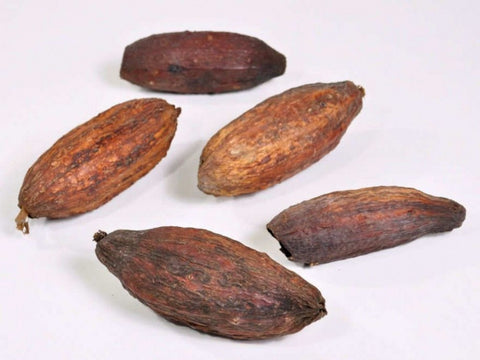 Cacao Pods - Natural Dried Pod Coco - Brown - 12-18cm - Paradise Crow -  Natural Design & Interiors