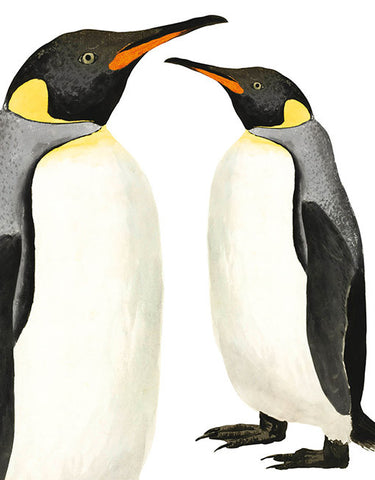 Natural History Museum Greeting Cards -  Penguin - Paradise Crow -  Natural Design & Interiors