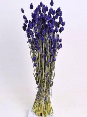 Dried Phalaris Lavender 70cm- Natural Dried Flowers-  Flower Bouquet - Paradise Crow -  Natural Design & Interiors