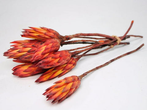 5 x Dried Protea Flowers Stems - Sugarbush - Dried Flowers - Paradise Crow -  Natural Design & Interiors