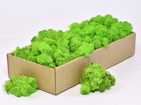 Spring Green Icelandic Reindeer Moss ( Box of 500g) - Wholesale - Paradise Crow -  Natural Design & Interiors