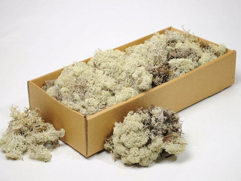 Natural Icelandic Reindeer Moss ( Box of 500g) - Wholesale - Paradise Crow -  Natural Design & Interiors