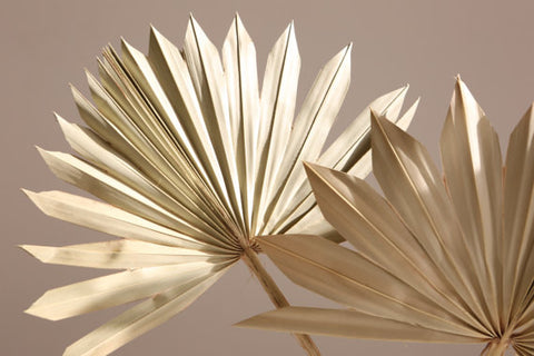 Sun Spears - Palm Fans for natural decorations - Natural Floral Arrangements - Dried flowers - Florisry - Paradise Crow -  Natural Design & Interiors