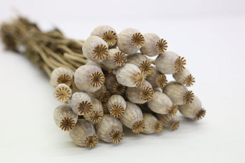 Dried Poppy Bunch - Natural Dried Flowers- Poppy Whole - Flower Bouquet - Paradise Crow -  Natural Design & Interiors